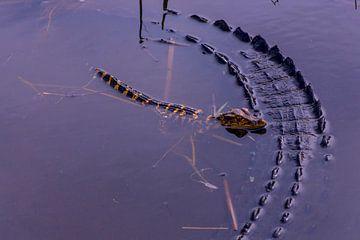 Alligator en baby van Martin van der Sanden