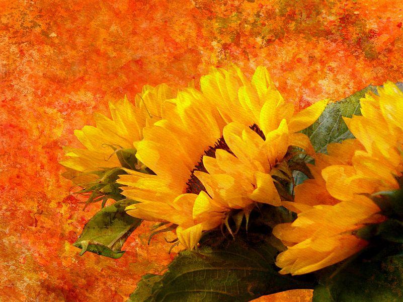 Sunflower 2020 von Andreas Wemmje