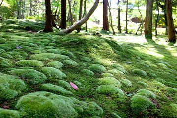 'Saiho-ji', Mostempel Kyoto- Japan  van Martine Joanne