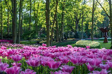 Roze tulpen in Keukenhof van Richard Steenvoorden