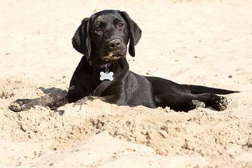 Puppy liggend in het zand von Renate Peppenster