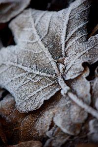 Frost van Johanna Kool