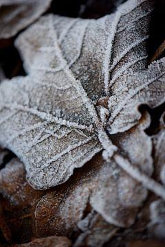 Frost von Johanna Kool