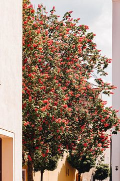 Boom met rode bloemen van Luca Kapitza