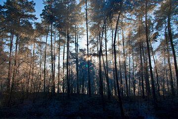 stralend bos von George Burggraaff