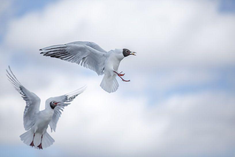 Battling Birds van Thomas Froemmel