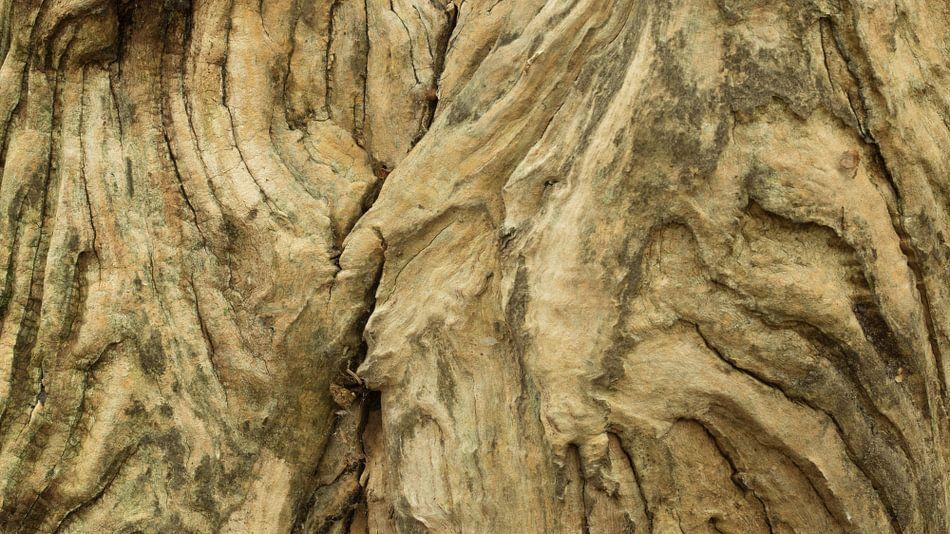 Verweerd hout van oude boomstam