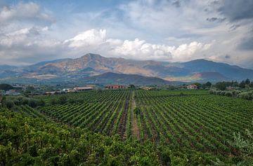 Wijnmakerij aan de voet van de Etna van Esther Seijmonsbergen