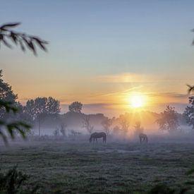 Paarden in de mist tijdens zonsopkomst van R Smallenbroek