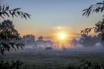 Pferde im Nebel bei Sonnenaufgang von R Smallenbroek