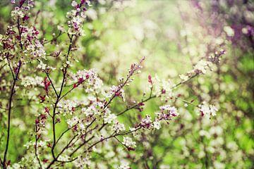 weiße blüten in grüner natur von Dörte Stiller