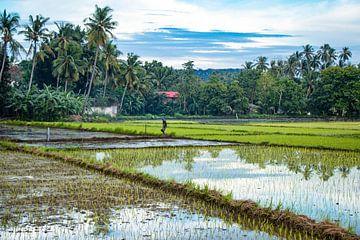 Werkende man in de rijstvelden van de Filipijnen von Dick Hooijschuur