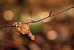 Afgevallen herfstblad tegen de fraaie herfstkleuren in de achtergrond.