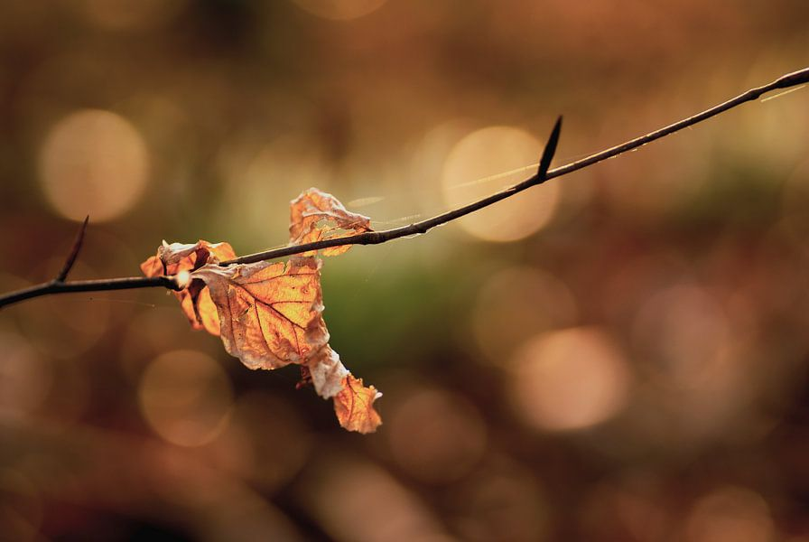 Afgevallen herfstblad tegen de fraaie herfstkleuren in de achtergrond. van Birgitte Bergman