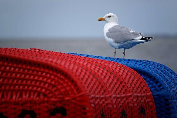Zeemeeuw op rode en blauwe strandstoel op de Duitse Wadden van Alice Berkien-van Mil