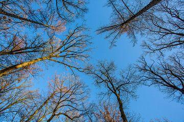 Zicht naar de hemel von Stefan Wapstra