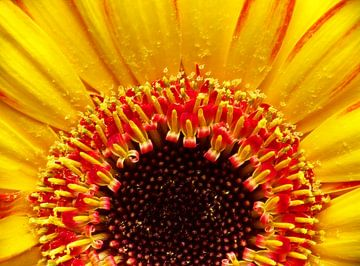 Goldene Farben von Caroline Lichthart