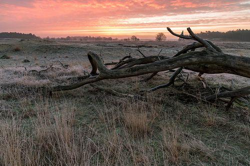 Hollandse prairie