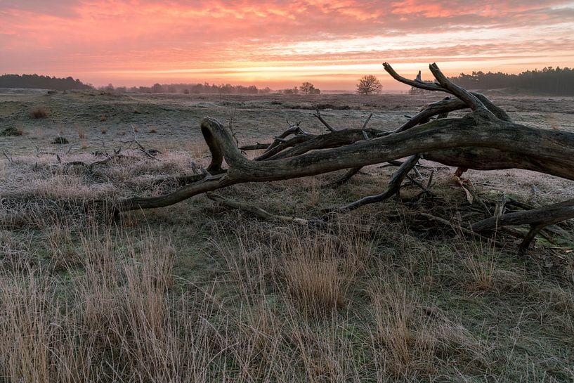 Hollandse prairie van Edwin Werkhoven