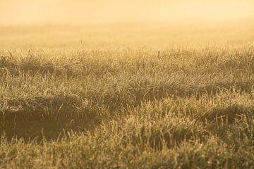 Het frisse gras in de mist kleur goud  in de ochtendzon van Michel Geluk
