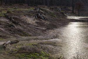 Woest Landschap, Surae, Dorst, Oosterhout, Breda, Baronie, Noord-Brabant, Nederland, Holland.