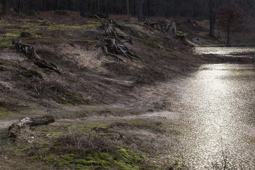 Desolate Landschaft, Sura, Durst, Oosterhout, Breda, Baronie, Nordbrabant, Niederlande, Holland. von Ad Huijben