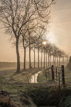 Bomenlaan in de ochtend von Moetwil en van Dijk - Fotografie