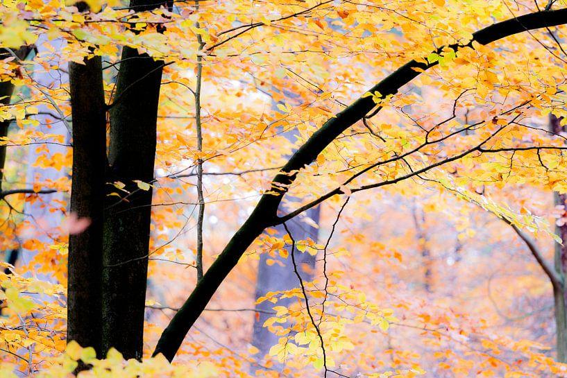 Bunter Herbstwald.  sur Mark Scheper