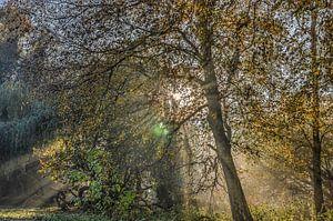 De zon en de bomen