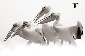 Pelikanversammlung von Britta Kärcher