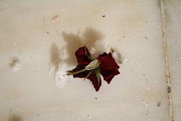 Verdorde, opgedroogde rode roos van Jetty Boterhoek