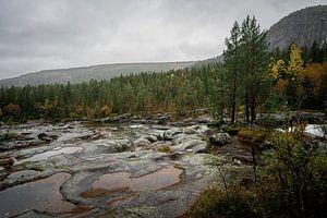 Laag staande rivier en bos in Noorwegen
