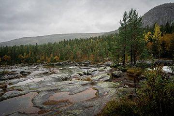 Laag staande rivier en bos in Noorwegen van Mickéle Godderis
