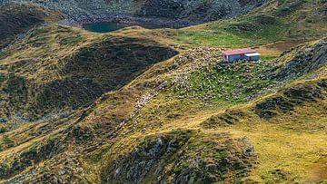 Schapen in de bergen in Roemenië van Jessica Lokker