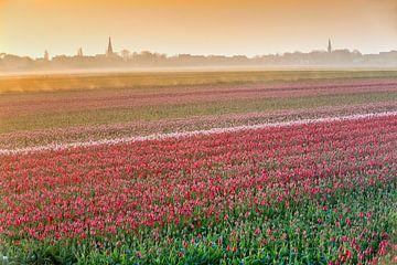 Bloeiende tulpenvelden in ochtendnevel van Frans Lemmens
