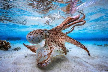 Dansen Octopus, Barathieu Gabriel van 1x