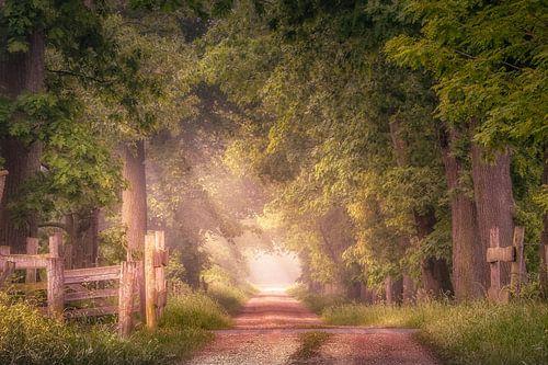 Sfeervol pad met eikenbomen aan het Smeetshof