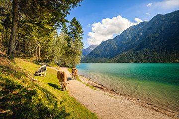 Vaches au lac Heiterwanger sur Lukas Fiebiger