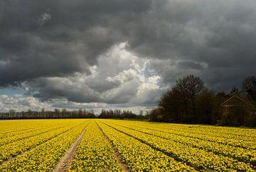Gele bloemen ondere donkere wolken sur Remco Swiers