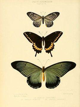 Vintage vlinder illustratie  van