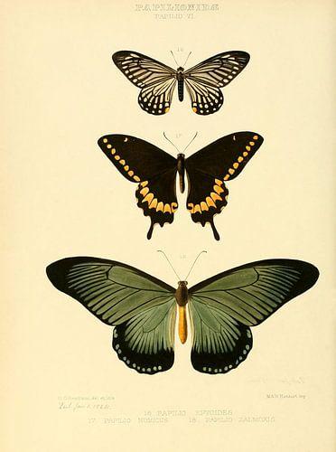 Vintage vlinder illustratie  van Prachtige Prints