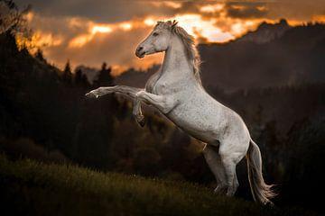 Wit paard krachtig tussen de bergen von Emma van Veldhuisen