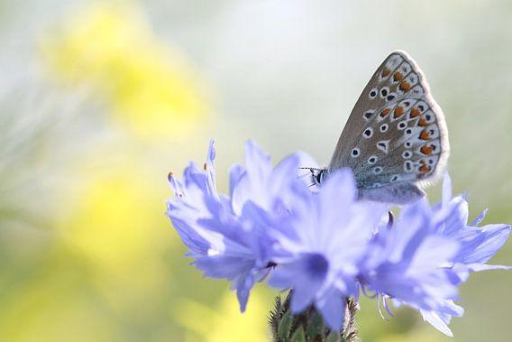 Blauw op blauw van Remco Stunnenberg