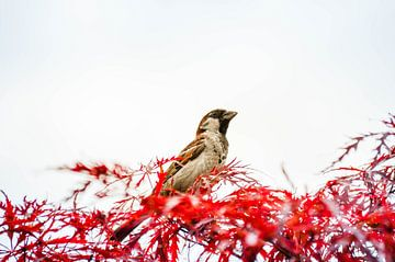 vogelpracht van Patrick Aniszewski