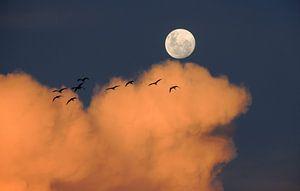 Vogels bij Maanlicht van Digital Universe