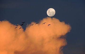 Vögel und das Mondlicht von Digital Universe