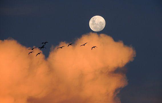 Vogels bij Maanlicht