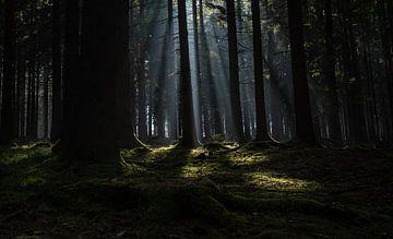 Zonnestralen in het donkere bos van Bjorn Dockx