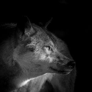 Loup von Etienne BRUNELLE
