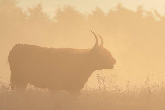 Silhouet van een Schotse hooglander van Richard Guijt